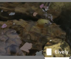 Lively LivePhotoの使い方