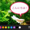 iOS10の新機能「Markup」で遊べて広がる写真の活用術