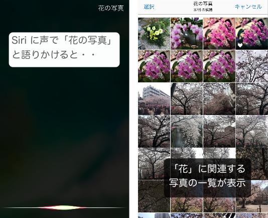 Siri iOS10 写真のキーワード検索の使い方