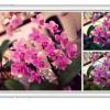 iOS10のスライドショーで写真を楽しく鑑賞してみよう